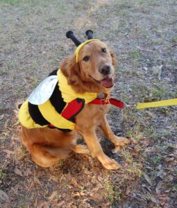 Doggie Bumble Bee