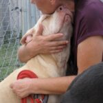 Need A Hug? Meet Mia, An Adoptable Dog from Satchel's
