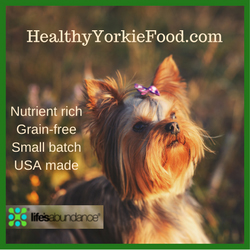 Healthy Yorkie Food | Sarasota Dog