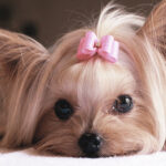 Beverly Hills Dog Grooms for a Cure in October