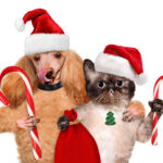 Holiday Pet Food Drive at Best Friends Animal Hospital
