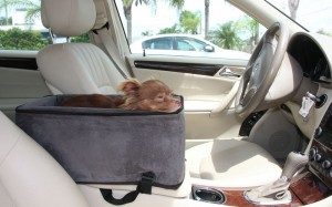 car safety for small dogs sarasota dog. Black Bedroom Furniture Sets. Home Design Ideas