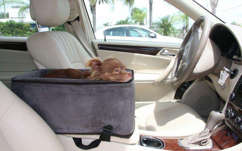 car safety for small dogs sarasota dog. Black Bedroom Furniture Sets. Home Design Ideas
