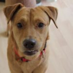 Jamie – An Adoptable Dog in Sarasota, Florida