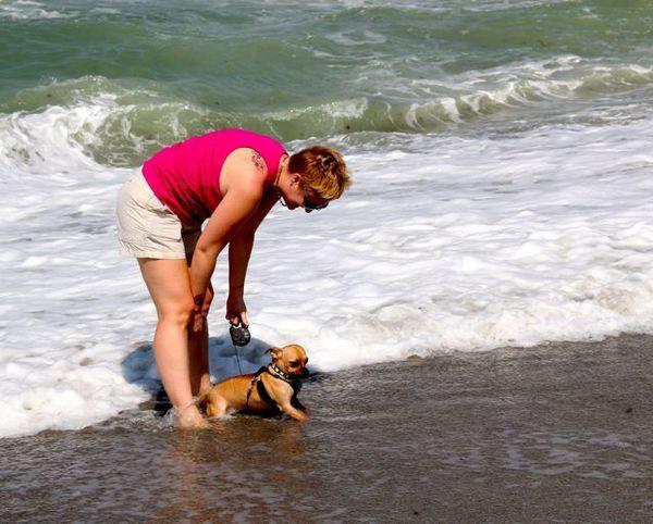 Sarasota Dog Friendly Parks