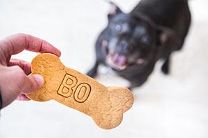 Good Citizen Dog Training Sarasota
