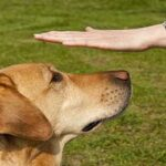 A dog's neurological exam
