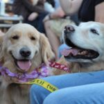 Pints for Paws SRQ – October 25, 2015