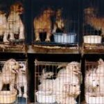 Help Stop The Retail Sale of Puppies in Sarasota