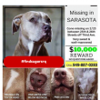 KEY STEPS TO FIND YOUR LOST DOG