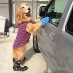 Car Wash Benefits Vintage Paws at Evie's Bee Ridge