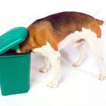 Sarasota Pet Emergency
