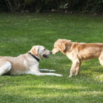Ask The Trainer – How to introduce a new dog to your home