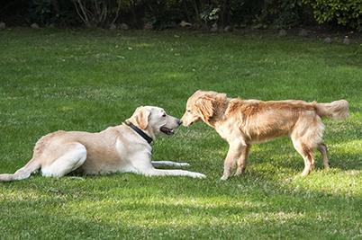 Palmer Ranch Paw Park   Sarasota Dog