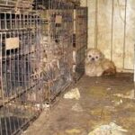 Support the ban on retail sales of dogs and cats