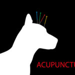 Wag and Learn Meetup – All About Acupuncture
