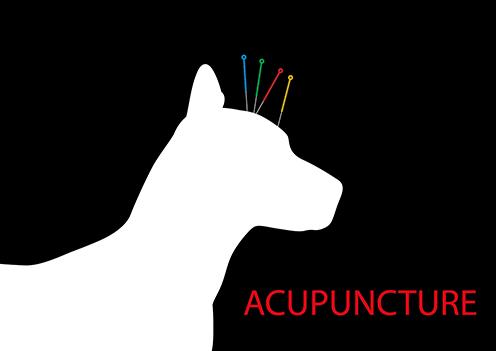 Top Florida Acupuncture Schools : Programs, Colleges ...
