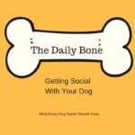 Getting Social With Your Dog