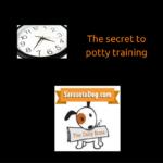 The Daily Bone – The Secret to Potty Training