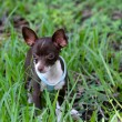 New Meetup for Small Breed Dogs in Sarasota