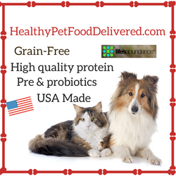healthy pet food delivered | sarasota dog
