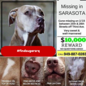 missing-dog-sarasota