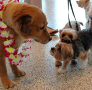 Bow Wow Luau SRQ | Sarasota Dog