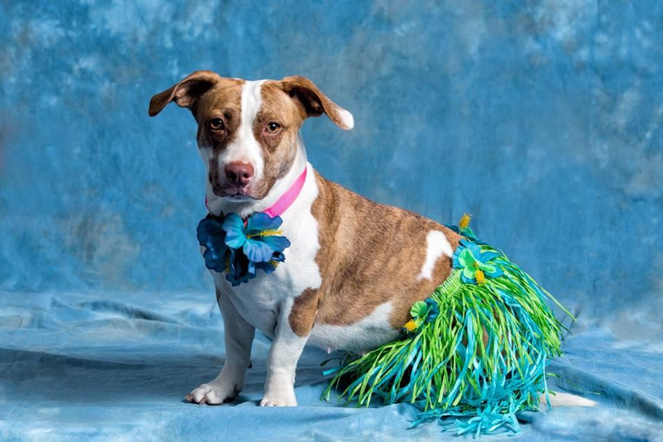 An Adoptable Dog: Blossom | Sarasota Dog