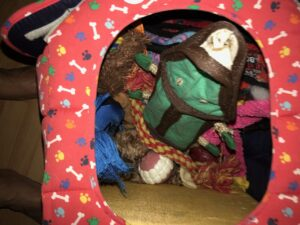 Full dog toy box| Sarasota Dog