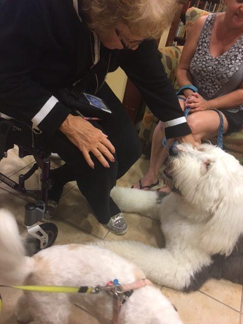 George, Jo, Desoto Palms | Sarasota Dog