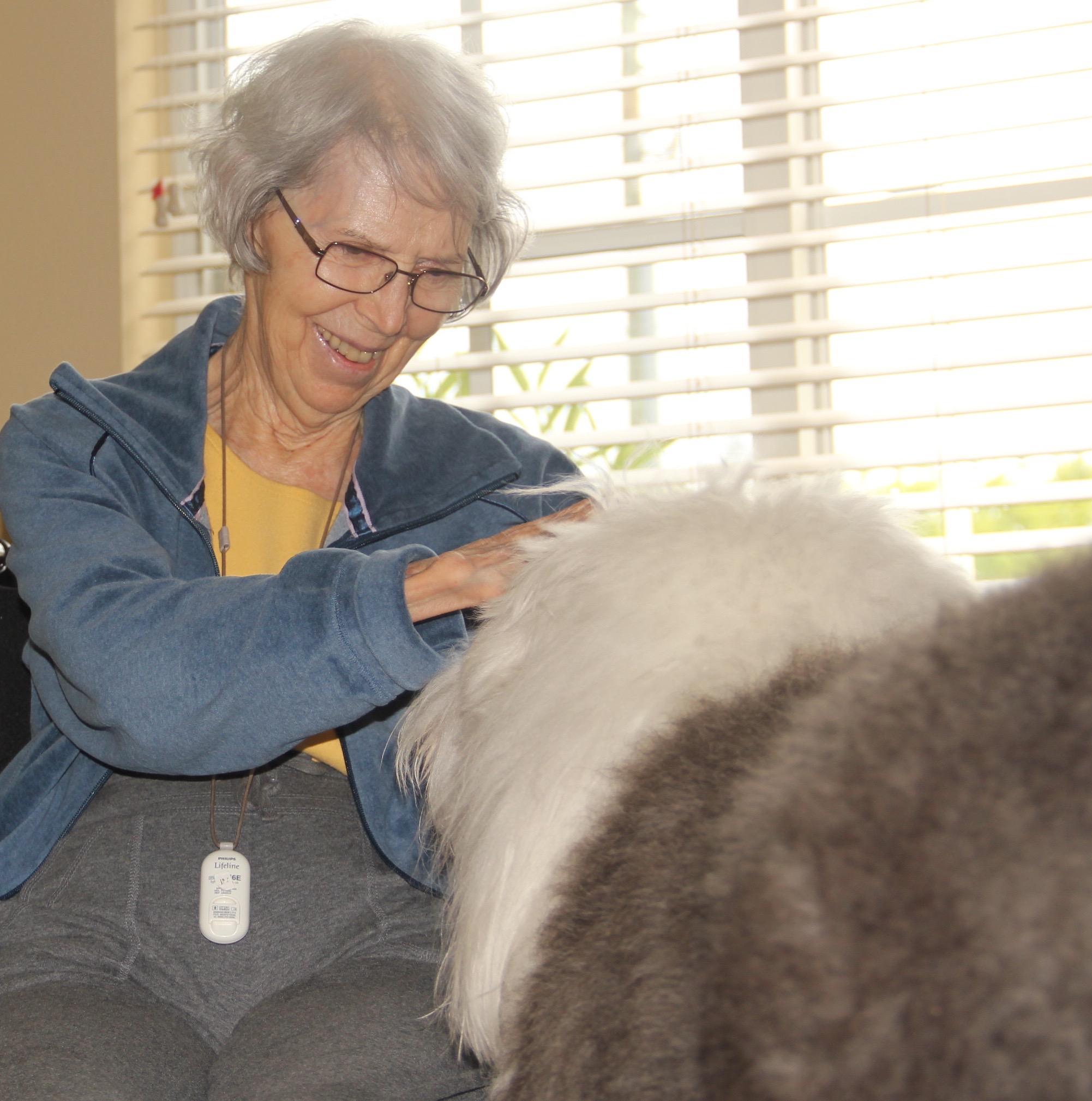 George - Olde English Sheepdog | Sarasota Dog