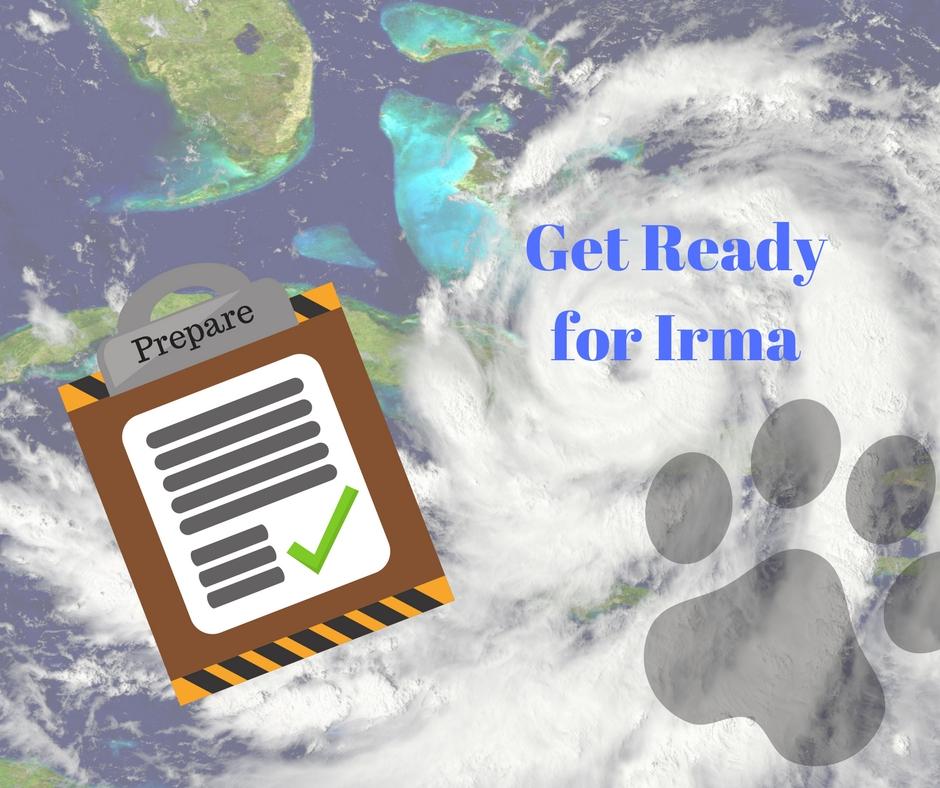 Prepare for Irma | Sarasota Dog