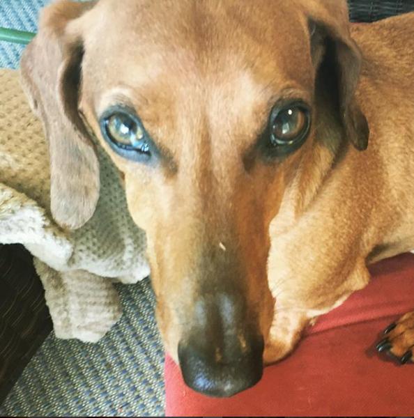 Doxy | Sarasota Dog