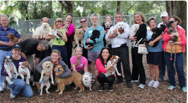Small Breed Dog Meetup | Sarasota Dog