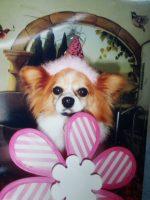 Many more Birthdays! |Sarasota Dog