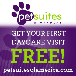 Pet Suites | Sarasota Dog