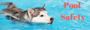 Pool Safety for Dogs | sarasota dog