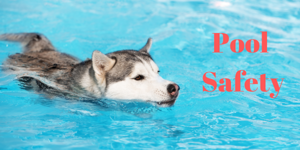 Pool Safety for Dogs | sarasota dog
