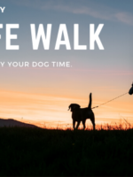 THE SAFE WALK | Sarasota Dog