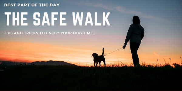 THE SAFE WALK | Sarasota Dog