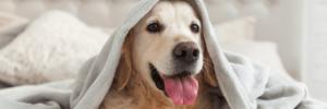 Boarding | Sarasota Dog