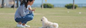 Dog Trainers | Sarasota Dog