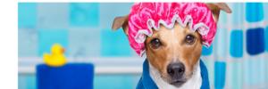 grooming | Sarasota Dog