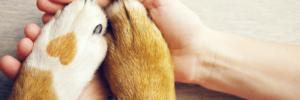 Pet Loss Services | Sarasota Dog