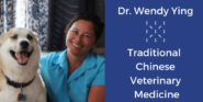 What is holistic vet care | Sarasota Dog