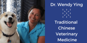 What is holistic vet care   Sarasota Dog